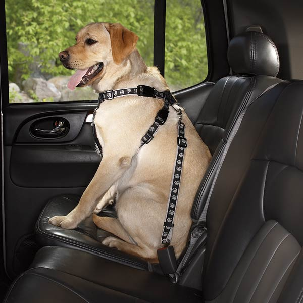 Leave the dog in the car in an accident